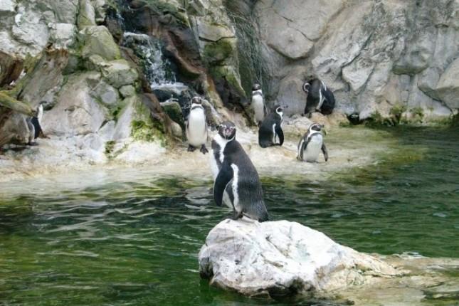 Penguins-Zoo-Schonbrunn-Palace-700x467